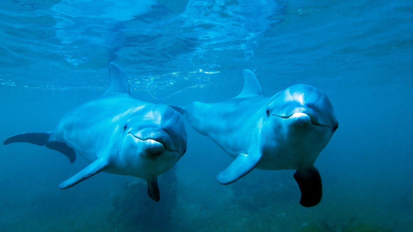 Nature's secret remedies: Self-medicating dolphins - BBC Reel