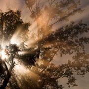 Fake trees to clean the skies thumbnail
