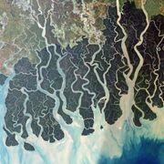 Sundarbans: Nature's bioshield thumbnail