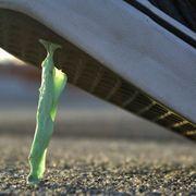 Chewing gum should self-dissolve thumbnail