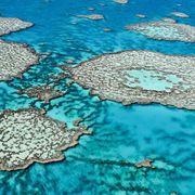 SOS: Save our seas thumbnail