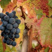 How to buy a vineyard thumbnail