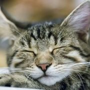 What do animals dream about? thumbnail