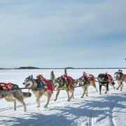 An ice road mapped by dog sled thumbnail