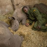 A new way to save Africa's big beasts? thumbnail