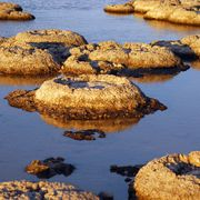 A billion-year-old living organism thumbnail