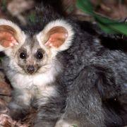 Australia's remarkable animal discovery thumbnail