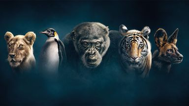 Dynasties (Credit: BBC Studios)