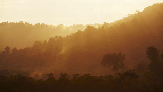Jungle roads less travelled (Credit: Mark Read)