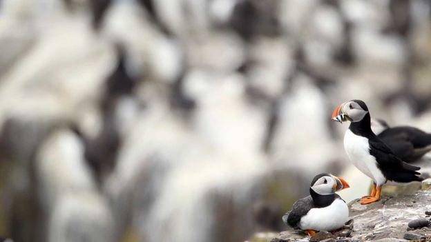 On the cliff's edge (Credit: Dan Kitwood/Getty)