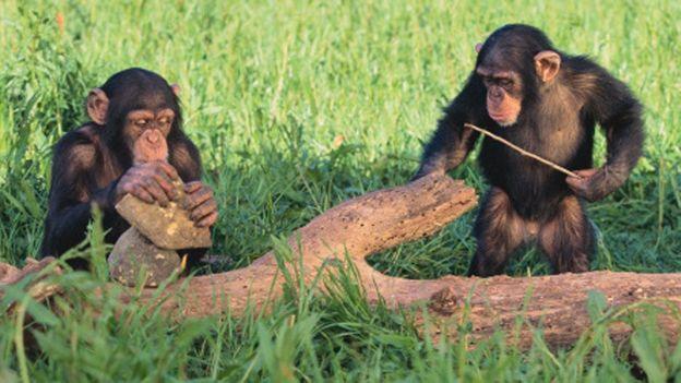 Top 10 intelligent animals
