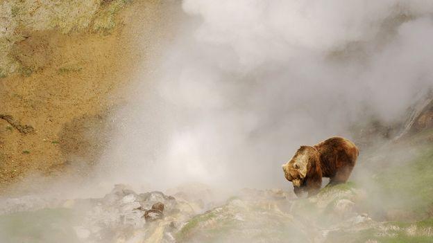 Bear sauna (Credit: Igor Shpilenok)