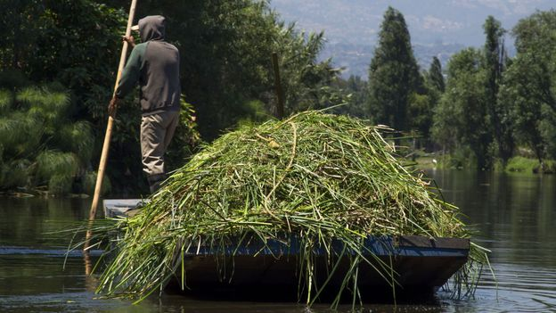 A farmer transports forage (Credit: Omar Torres/AFP/Getty)