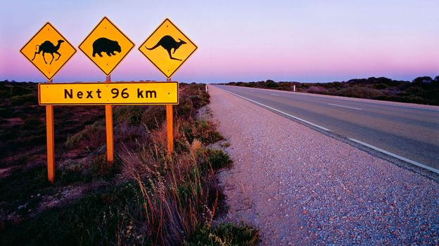 On the Eyre Highway, watch out for wombats (Credit: Peter Walton Photography/Getty)