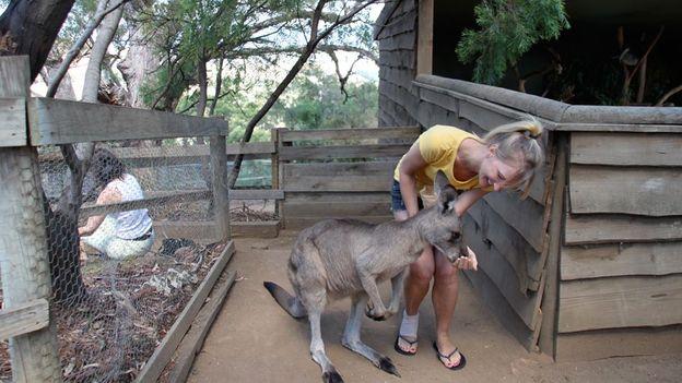 Kangaroo feeding (Credit: Gina Dowd)