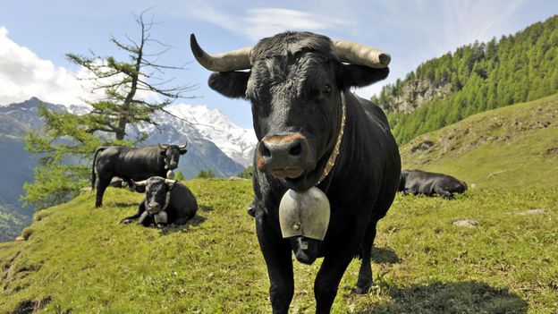 Another well-known Valais species (Credit: Christian Perret/Valais/Wallis Promotion)