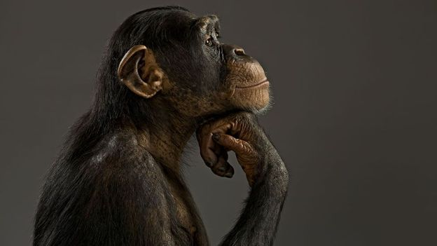 Should we engineer animals to be smart like humans?