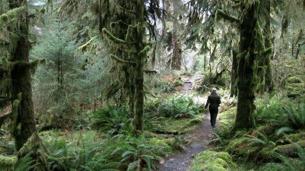 Into the Hoh Rainforest (Credit: Amanda Castleman)