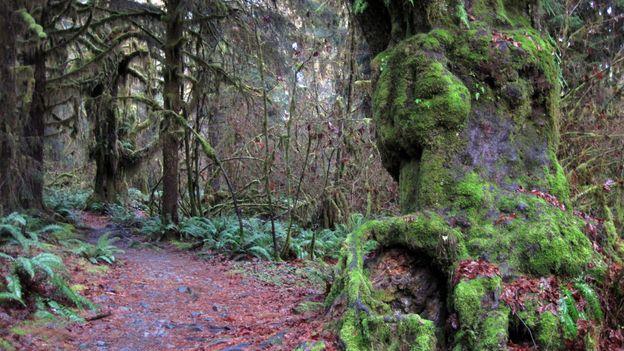 The verdant rainforest (Credit: Amanda Castleman)