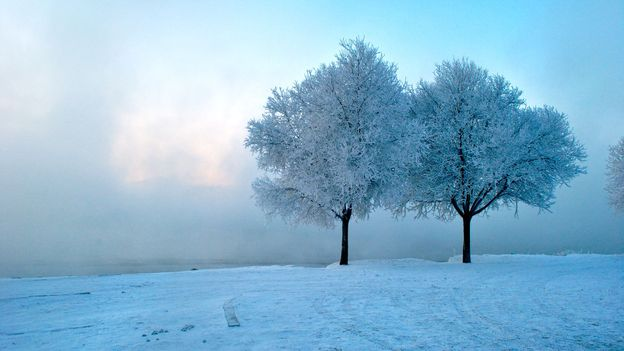 Two trees amid the rime (Credit: Gabrielle Jaffe)