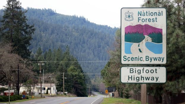 Into Sasquatch land (Credit: Andy Murdock)