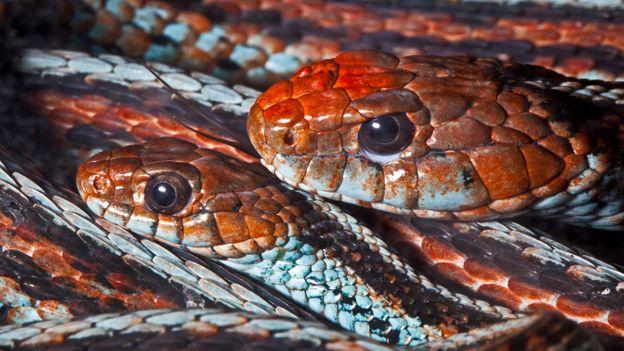 Her vagina in snake Woman Sleeps