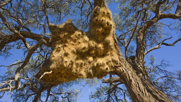 Most Amazing Nests In The Animal Kingdom