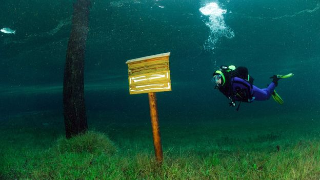 An unlikely place for a signpost (Credit: Credit: WaterFrame/Alamy)