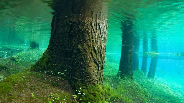 Tree trunks after the annual flood (Credit: Credit: Thomas Aichinger/VWPics/Alamy)