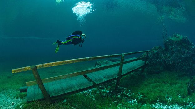 Hovering above the bench (Credit: Credit: Waterframe/Alamy)