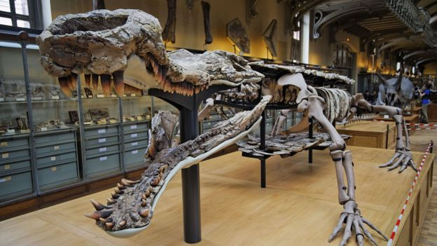 Sarcosuchus imperator, also known as 'SuperCroc' (Credit: Sergey Skleznev/Alamy)