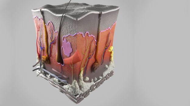 Demodex akarları, hayatlarını insan derisi üzerinde ve içinde geçirirler (Kredi: Science Picture Co./SPL)