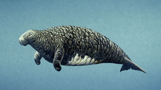 BBC - Earth - The giant cow that swam the ocean