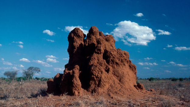 Bbc Earth 2000 Year Old Termite Mound Found