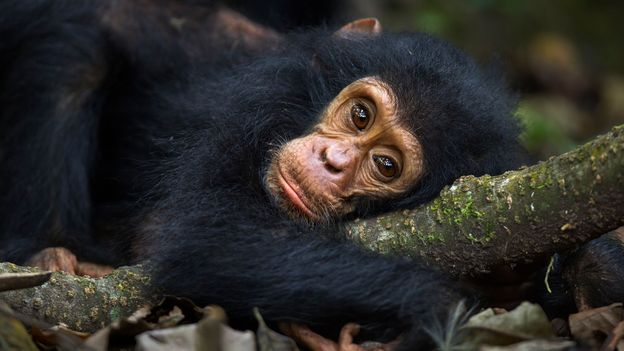 BBC - Earth - Many animals can become mentally ill
