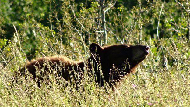 Basking in the Canadian sunshine (Credit: Credit: Carol Patterson)