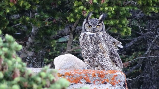 Animals thrive in the Alberta park (Credit: Credit: Carol Patterson)
