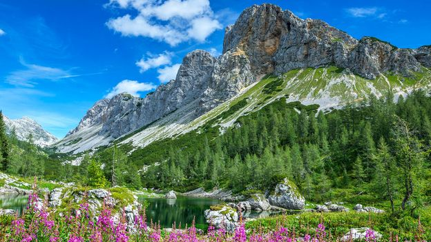 Wildflowers cover alpine fields in spring (Credit: Credit: zkbld/Thinkstock)