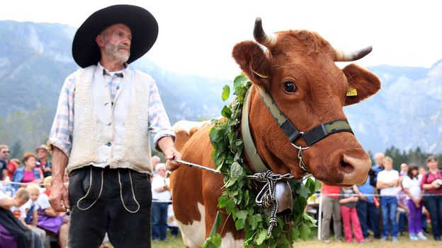 Villagers celebrate the cows' homecoming every autumn (Credit: Credit: Mitja Sodja/Tourism Bohinj)