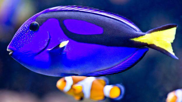 Dory in Finding Nemo