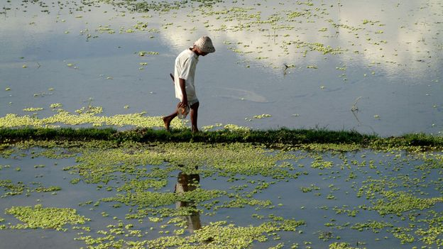 Workers tend fields growing rice, a staple in Balinese culture (Credit: Credit: Edmund Lowe/Alamy)