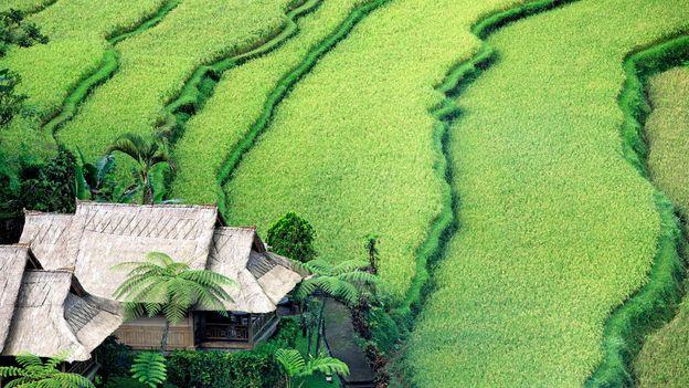 Terraced rice paddies cover Bali's landscape (Credit: Credit: CBuchananstock/Alamy)
