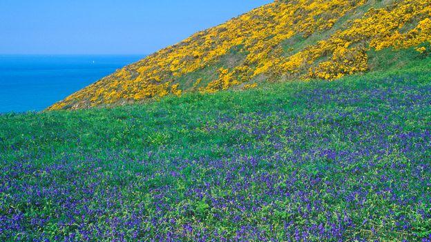 A charming look around the island of Sark (Credit: Credit: Kuttig RF Travel/Alamy)