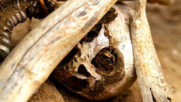 The haunting remains of a skull (Credit: Credit: Ian Lloyd Neubauer)
