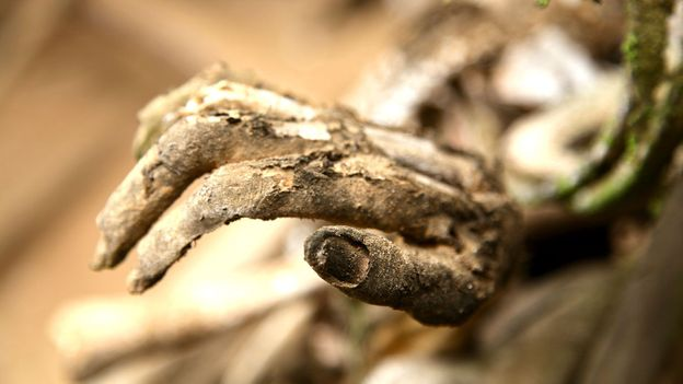 Detailed fingernails were preserved in the smoke (Credit: Credit: Ian Lloyd Neubauer)