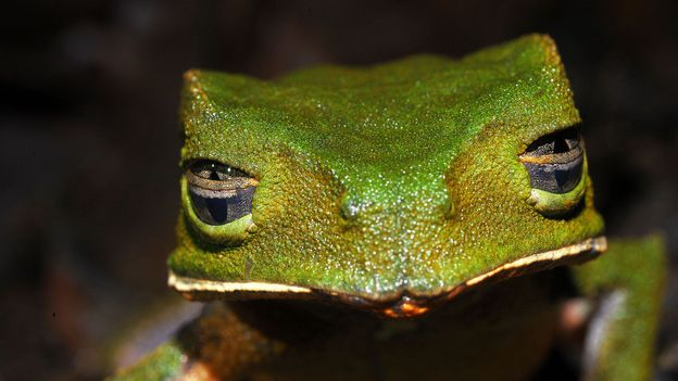 The Sumaco Biosphere Reserve holds hundreds of different species of wildlife (Credit: Credit: Peter Vrsansky)