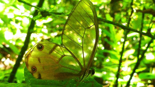 A moth blends into its forest surroundings (Credit: Credit: Peter Vrsansky)