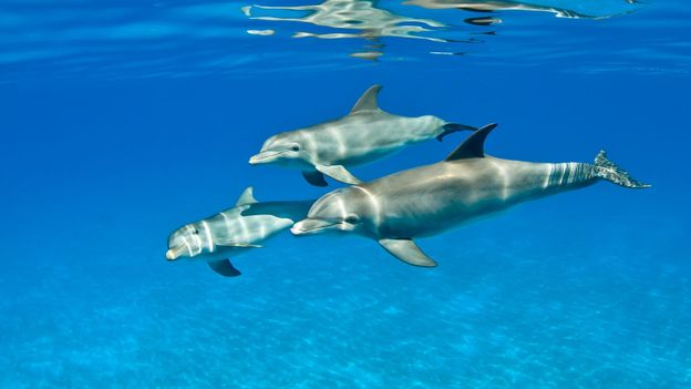 Are Dolphins smarter than Dogs? - Quora