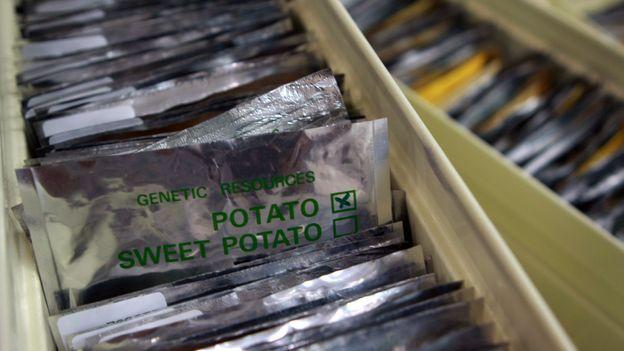 Packs of seeds, preserved at the Svalbard Global Seed Vault (Credit: Credit: Ernesto Benavides/AFP/Getty)