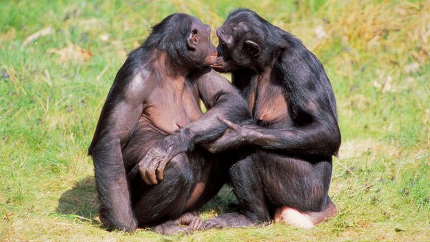 Women having sex with apes videos